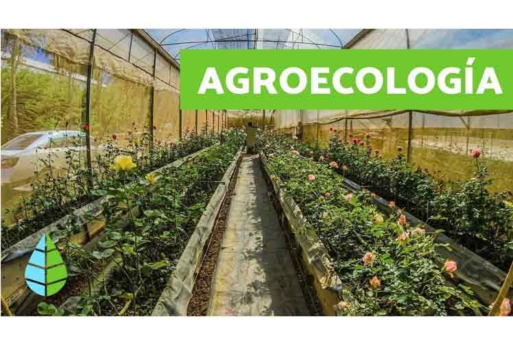 00 dsh agroecologia cuba foro