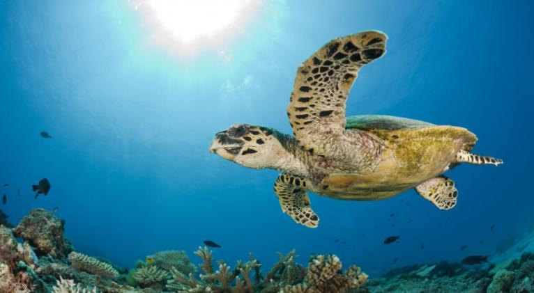 dia mundial de los oceanos 1 1280x720