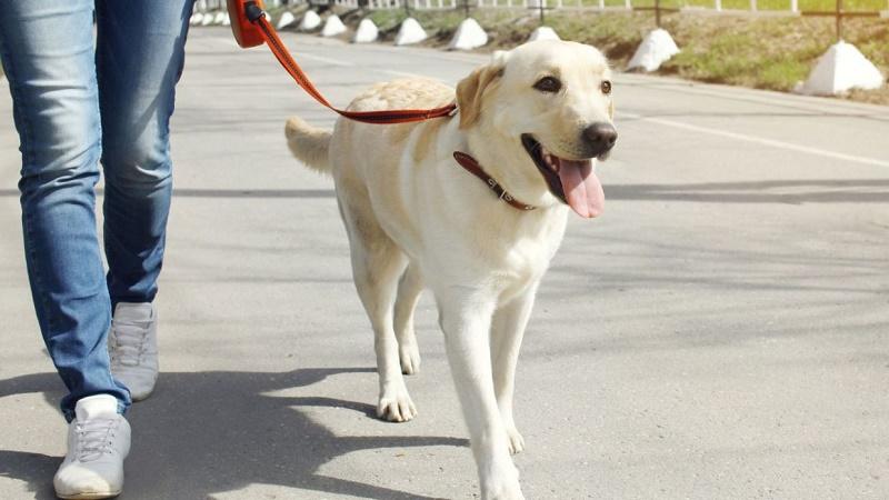 pasear perro brinda mejor salud