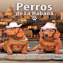 Multimedia Perros de La Habana