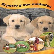 El perro y sus cuidados